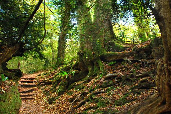 Пазлвуд: сказочный лес на рудниках Римской империи