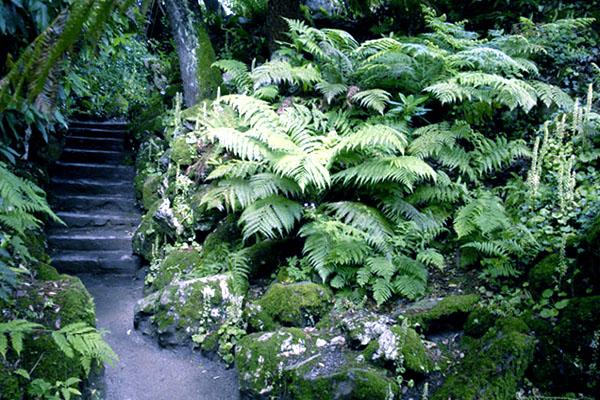 Потерянные сады Хэлиган