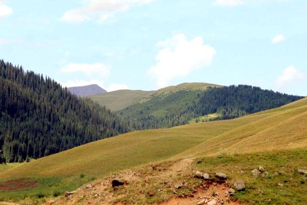 Бартогай